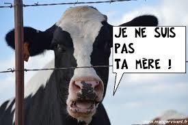 Le lait ? C'est vache !