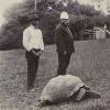 Jonathan la tortue parcourt son île depuis 185 ans: vous connaissez le secret de sa longévité?