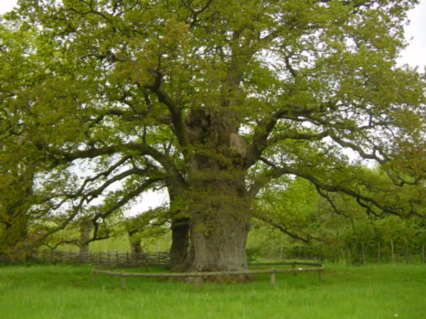 """ La vie secrète des arbres"""