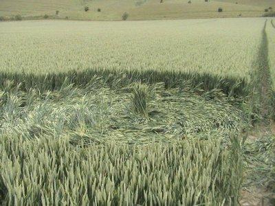 Les Crop Circles !!