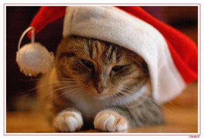 Joyeuses fêtes de fin d'année à tous !!
