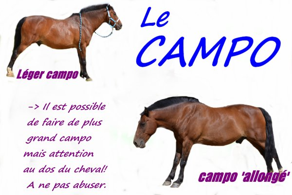 Tutoriel Campo