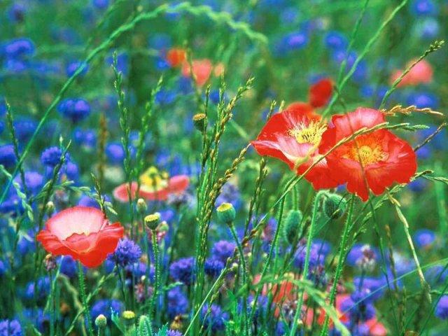 Blog de fleurdeschamps338