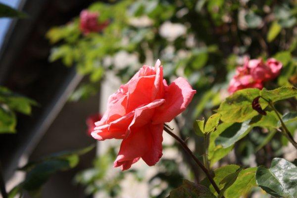 Botanique  (2)