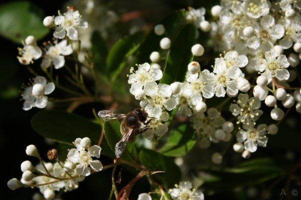 Botanique  (3)