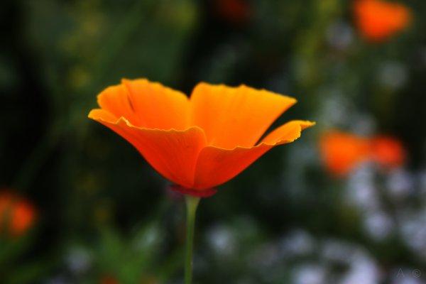 Botanique  (4)