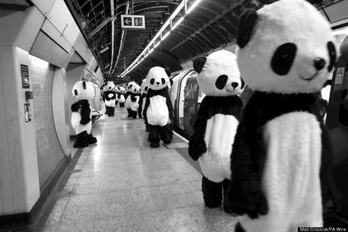 Qui veux attraper des panda avec moi ? *q*