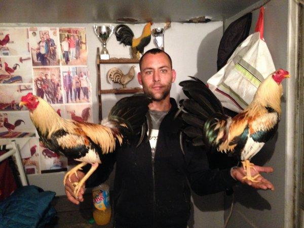 tous les coqs du blog sont a vendre coq preparee, coq en plume, poule et je les envoi dans toute la france en 24 heure