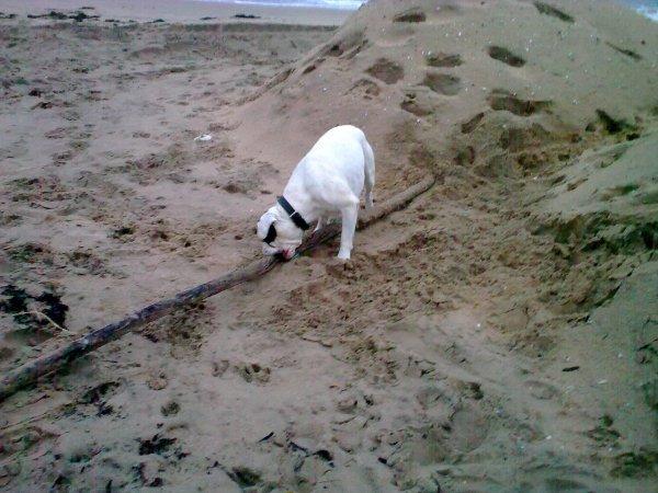 Dimanche a Ronce les bains ,ils refont la plage en ce moment ,La mer prend  sur les plages