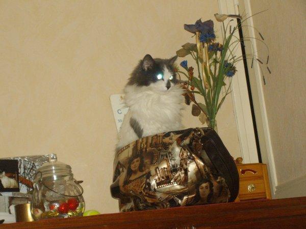 Clochette a testé le nouveau  sac de Liz ,mdr elle le trouve confortable