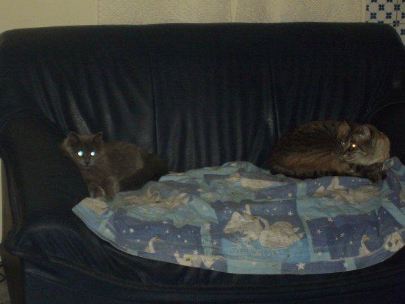 voila la photo du siecle mdr Chipen veut bien se coucher avec moi sur le canapé de JG ,mais je dois tenir mes distance