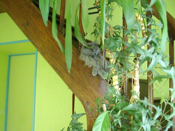 câline aime dormir dans les escaliers