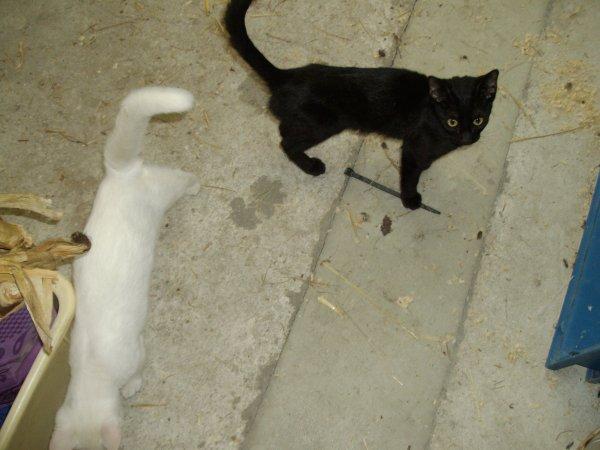 regardez comme ils sont beaux ,un blanc ,une noir