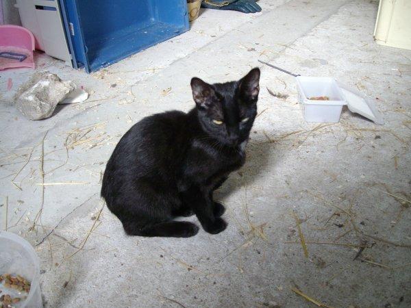 nouvelles photos des chatons que j'ai trouvé