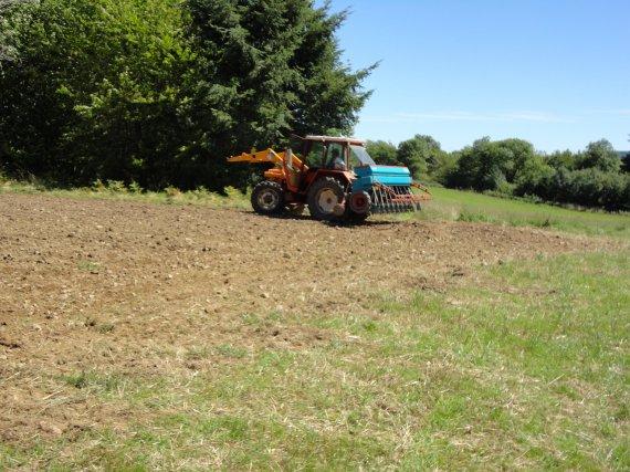 semis de ray grass 2011