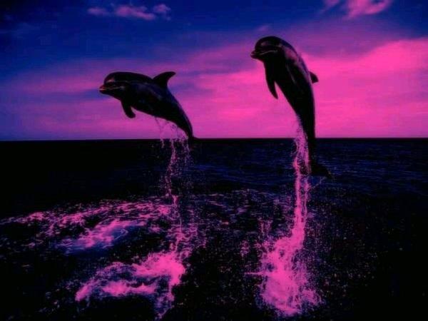 Ma patin les dauphins
