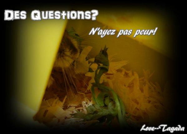 Des Questions? Des Réponses!