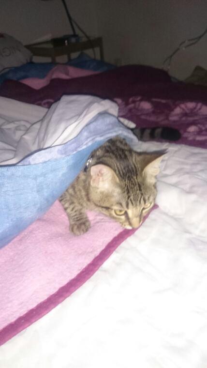 Louna joue à cache cache