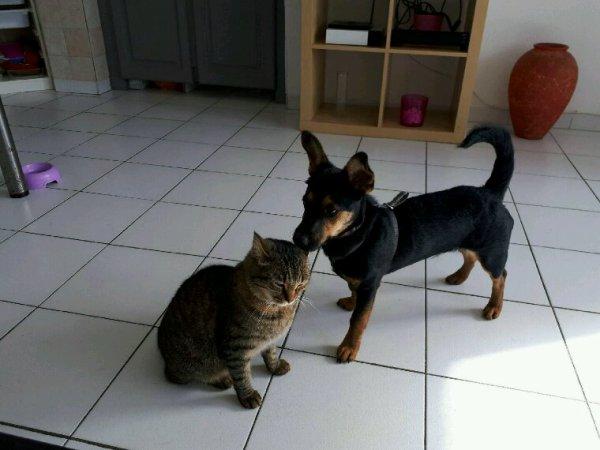Ça y est c'est l'amour fou entre mon chat louna et mon chien moko