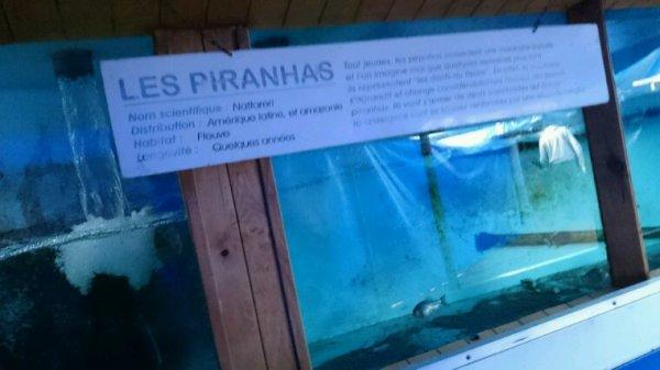 Aquarium à côté de narbonne