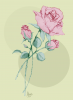 La rose..