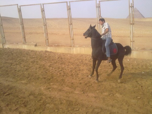 This is a new horse I'm racing ability and endurance of long-dist