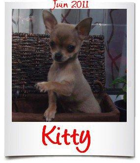 kitty a gagne un concour au mois de juin