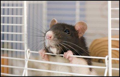 Noms de Rats ou Autres ♥