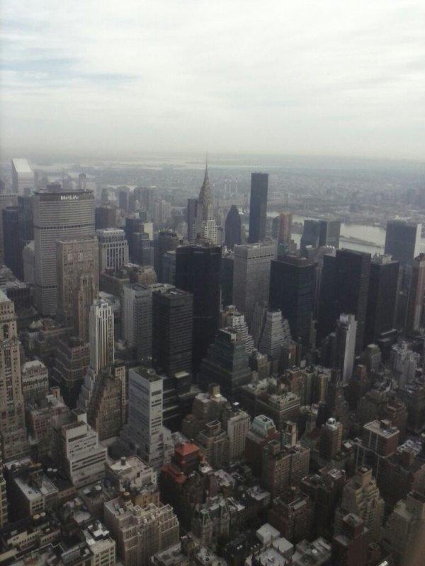 New york bitches