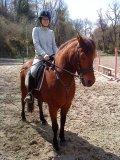 Photo de vente-equitation-du22