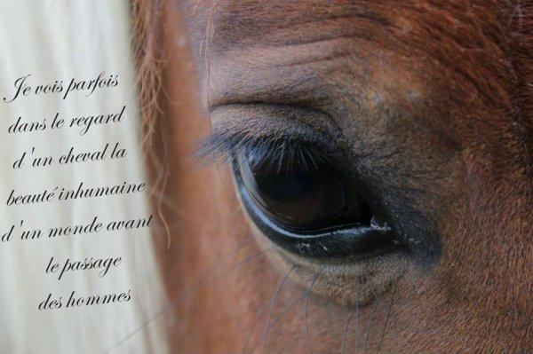 Un cheval ça nous transmet tellement d'émotions <3