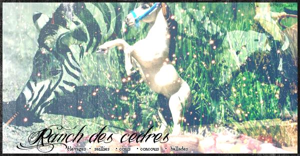 ~ Bienvenue aux Écuries Des Cèdres ~