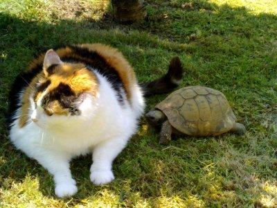 ~la tortu et le chat de mamie