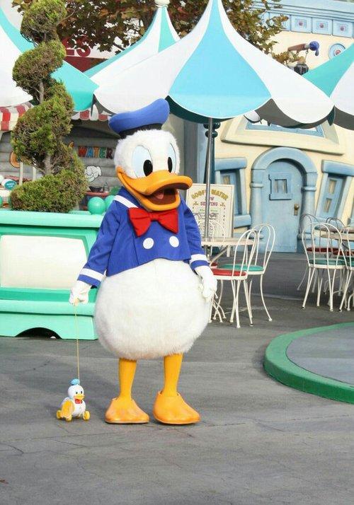Joyeux Anniversaire à notre canard préféré ! 🎂 Déjà 83 ans pour ce bon vieux Donald...