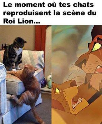 quand les chat refait la scène du roi lion