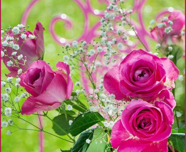des roses pour vous