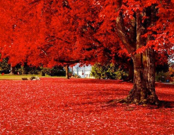 beauté d automne au plaisir