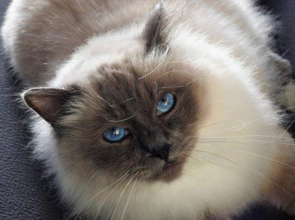 déjà 22 semaine que tu es partie mémère - Hommage as mémère une de mais chatte décède