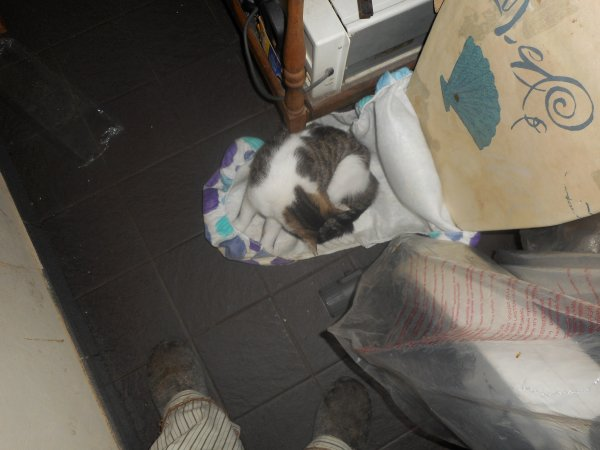 avis disparition sur Gilly ( Charleroi Hainaut Belguique ) ces le chat ma mere