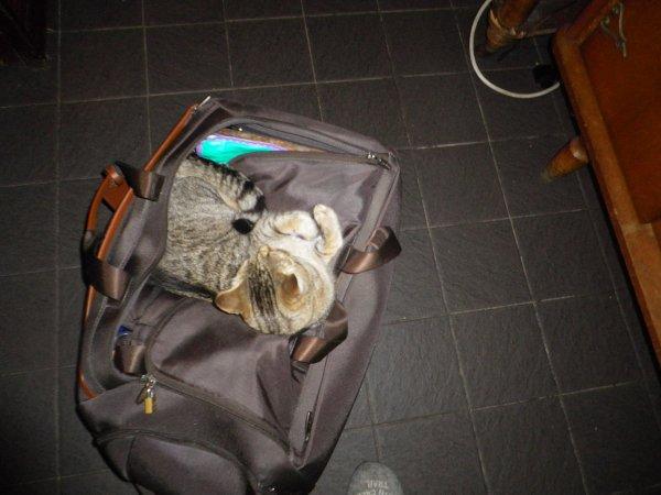déjà 33 semaine  que tu es partie mémère - Hommage as mémère une de mais chatte décède
