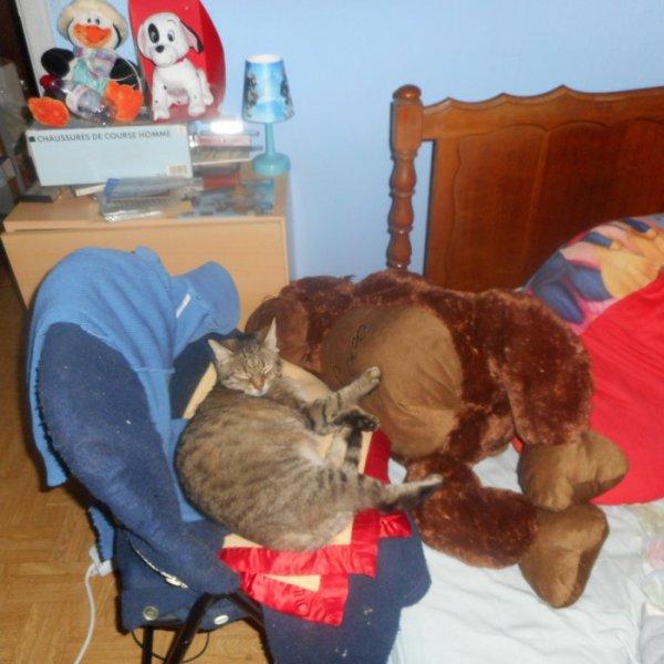 Hommage-Grisette-ma-chat  fête ses 52 ans demain, pense à lui offrir un cadeau.Aujourd'hui à 00:00
