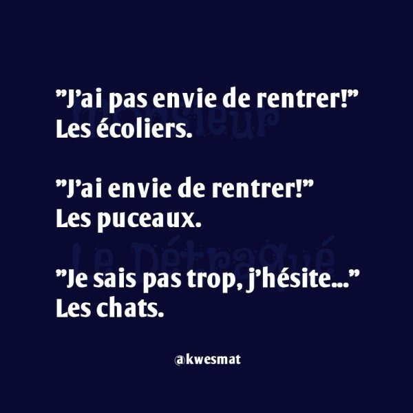 Lol sacré chat