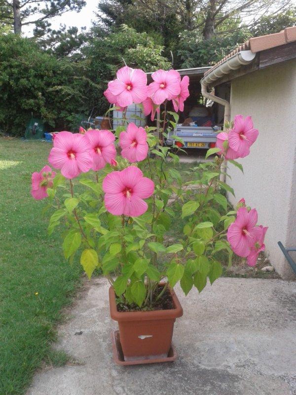 Ma petite plante ( 1 mètre 90 cm ) mdr