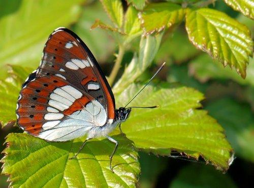 papillon - paysages - nature - structure - rue