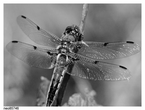 papillon - macro - libellules - special