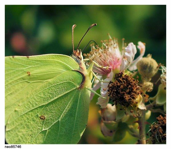 lezard nature paysages insectes macro etc