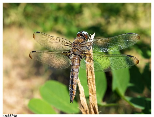 portrait libellules