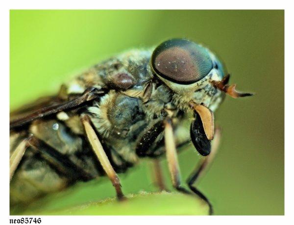 macro insecte objectif 50Mm et doubleur HR7 - autre