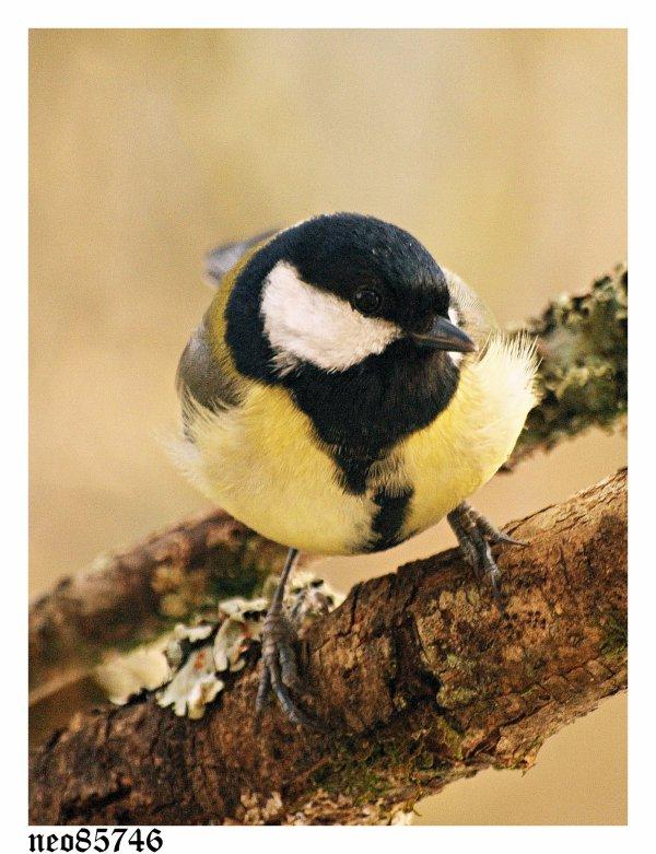 les oiseaux suite