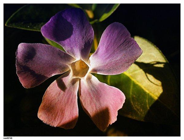 MON REFLEX OLYMPUS E-5 tropicalisé en allu et magniésium nature macro photographie